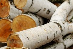 Birch logs. A pile of birch logs - shallow depth of field Royalty Free Stock Image