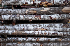 Birch logs Royalty Free Stock Images