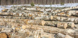 Birch logs. Royalty Free Stock Images