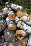 Birch logs Stock Image