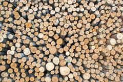 Birch logs on the logging. The universal abstract composition for the background Royalty Free Stock Photos