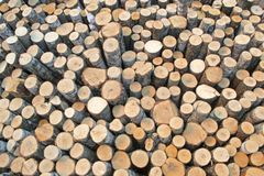 Birch logs on the logging. The universal abstract composition for the background royalty free stock images
