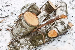 Birch logs on the snow Stock Photo