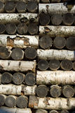 Birch logs stack. A wall of Birch Pavilion in Gatchina, Russia Royalty Free Stock Photo