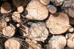 Birch logs Stock Photography