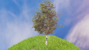 Birch in the meadow animation. Single birch tree standing on lake waterside on bright summer day stock video