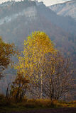 Birch mountain autumn mist Stock Images