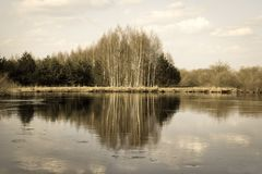 Birch and pine forest reflections in the water of the river. Beautiful drawing of branches and trunks. Calm flow. Sunny spring day with clouds Royalty Free Stock Photography