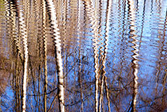 Birch reflection on water Stock Image