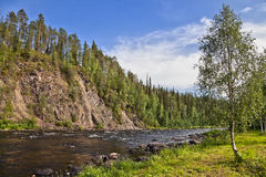 Birch and river. Birch on the shore of a mountain river Stock Image