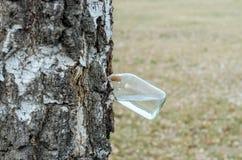 Birch sap Royalty Free Stock Photo