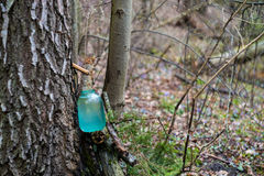 Birch sap. In forest leaking to glass container Royalty Free Stock Photos
