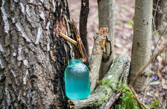 Birch sap Stock Image