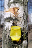 Birch sap Royalty Free Stock Photos