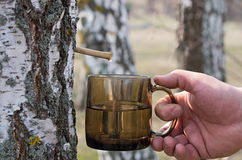 Birch sap Stock Photo