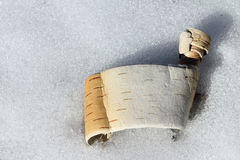 Birch scroll Royalty Free Stock Photo