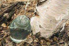 Birch sfh drips into the jar . Royalty Free Stock Image