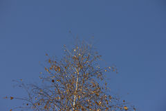 Birch in the sky. Photo of birch teken on november Stock Photo