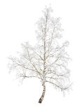 Birch in snow frost Royalty Free Stock Images
