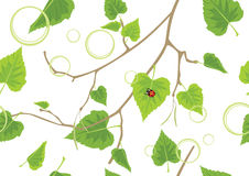 Birch sprig. Decorative spring background. Illustration Stock Images