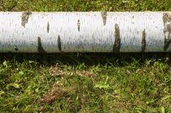 Birch stem lying on grass Royalty Free Stock Image