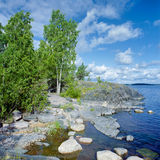 Birch on the stony shore of Ladoga lake Stock Image