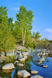 Birch on a stony shore of Ladoga lake Stock Photo