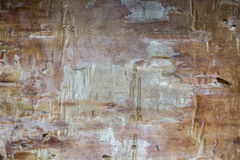 Birch texture Royalty Free Stock Images