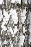 Birch Textured Stock Photo