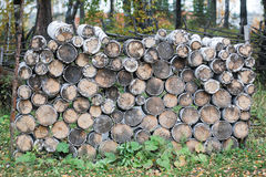 Birch Timber Royalty Free Stock Photo