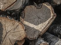 Birch timber piled up. With some lovely patterns royalty free stock photo