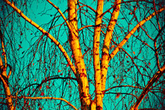Birch tree in autumn Stock Photography