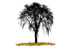 Birch tree, autumn leaf fall, illustration. Stock Photos