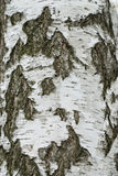 Birch tree bark Stock Photography