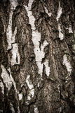 Birch tree bark background Royalty Free Stock Photography