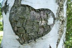 Birch, Tree, Bark, Heart, Love Stock Photo