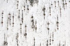 Free Birch Tree Bark Texture. Stock Photography - 182800492
