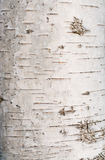 Birch tree bark texture Stock Photos