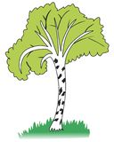Birch tree. Without background. Vector format royalty free illustration