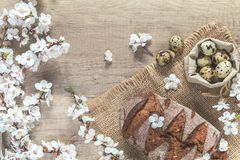 Birch tree blossom branch, quail eggs and rye bread. Apricot tree blossom branch, quail eggs and rye bread on the wooden background with copy space, toned photo Royalty Free Stock Photography