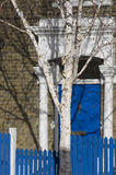 Birch-tree on blue door background.Entry blue door to hose in London England Royalty Free Stock Photography