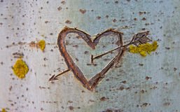 Birch tree with carved heart Stock Photos