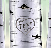 Birch tree with carved hearts and place for text Royalty Free Stock Photography