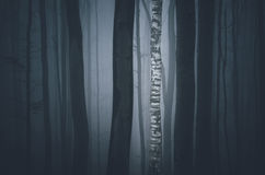 Birch tree in dark forest Stock Photography