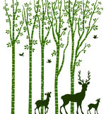 Birch Tree with Deer Stock Photo