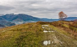 Birch tree by the dirt road on hill. Gloomy autumn landscape in mountains with snowy tops in the distance Stock Images