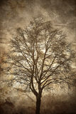 Birch tree in dusk light Royalty Free Stock Images