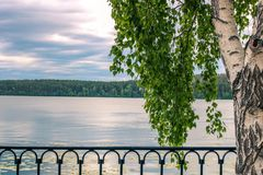 Birch tree with a fluffy crown in front of the calm lake and cloudy sky. Russian or Eastern Europe landskape stock photo