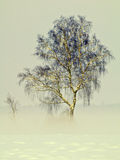 Birch tree in fog Royalty Free Stock Photos