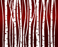 Birch tree forest pattern Stock Image